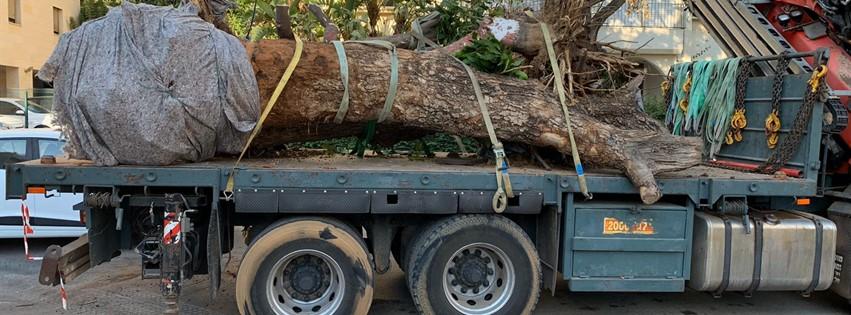 עצים על משאית אלעזר מנופים
